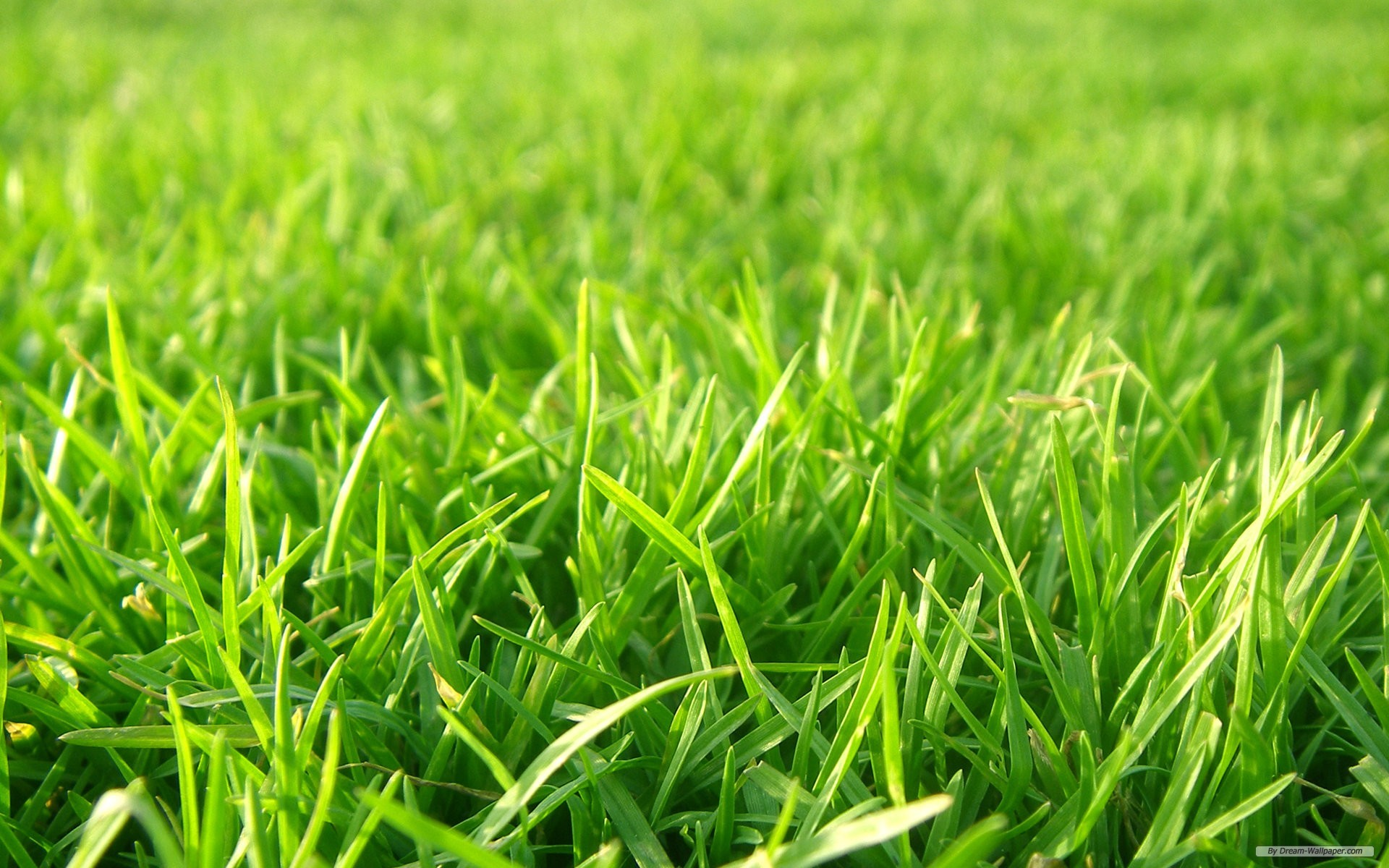 wallpaper – Grass Football Pitches wallpaper – wallpaper