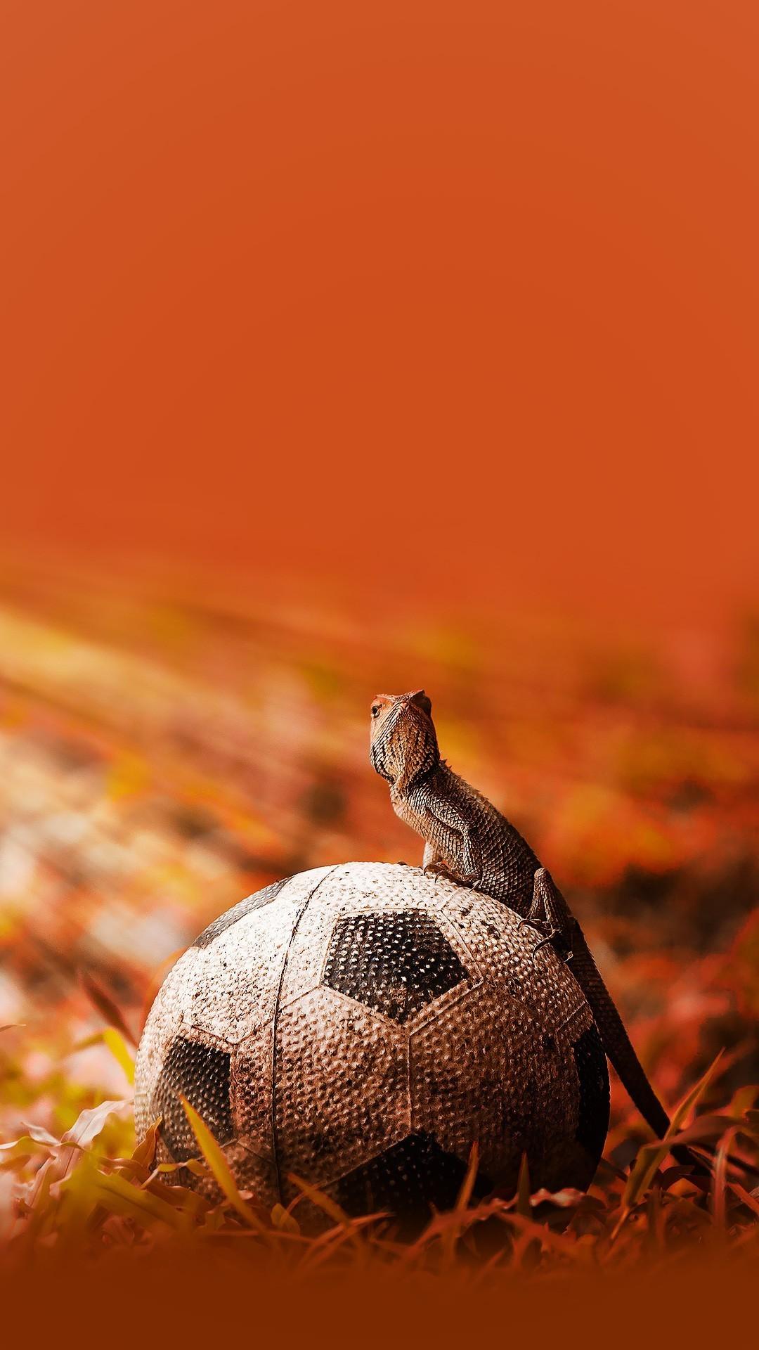 Iguana on a soccer ball Wallpaper