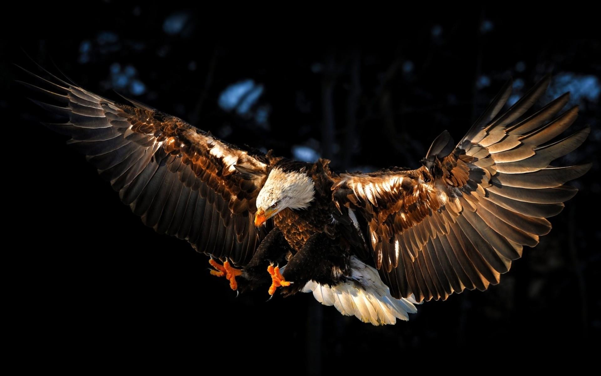 Top 25+ best Eagle wallpaper ideas on Pinterest   Eagles, American eagle  flights and Bald eagle