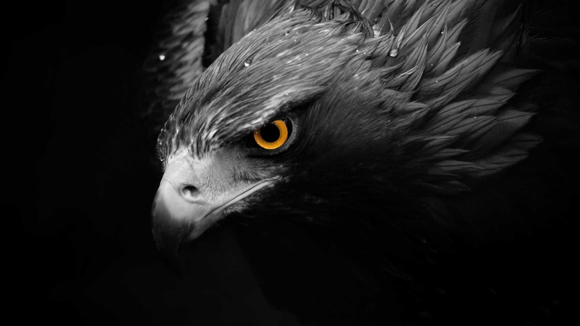 Eagle Wallpaper HD – Eagle Images & Eagles HD Wallpapers