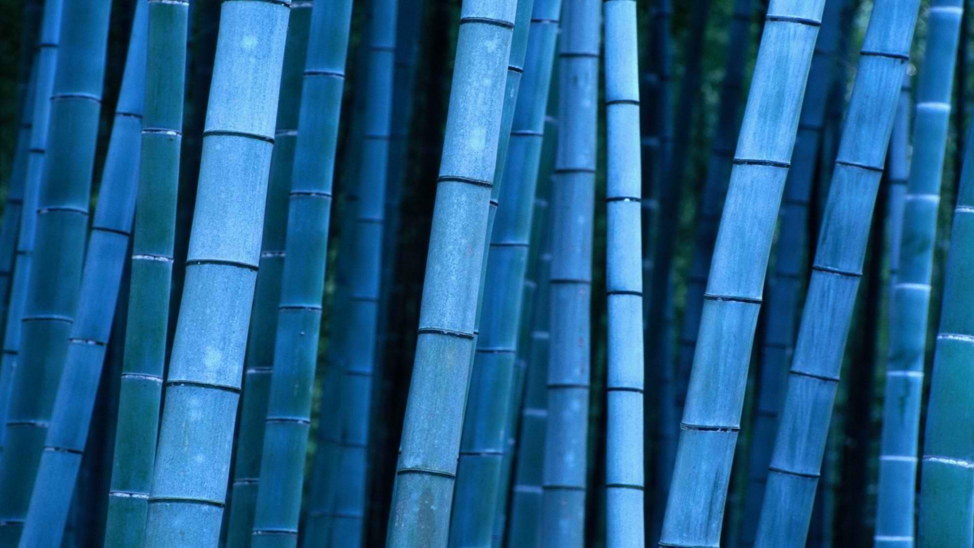 Wood-Bamboo-Wallpaper-HD