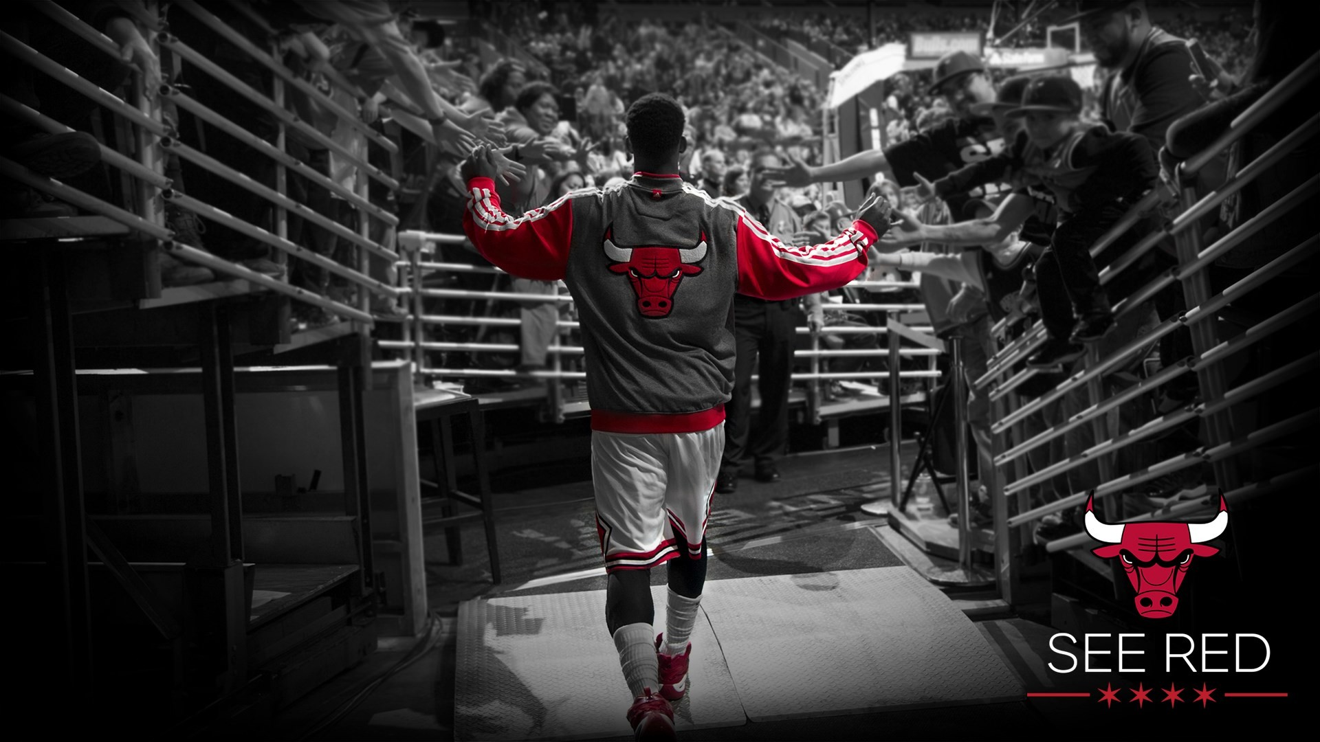 Chicago Bulls Wallpaper HD Picturez