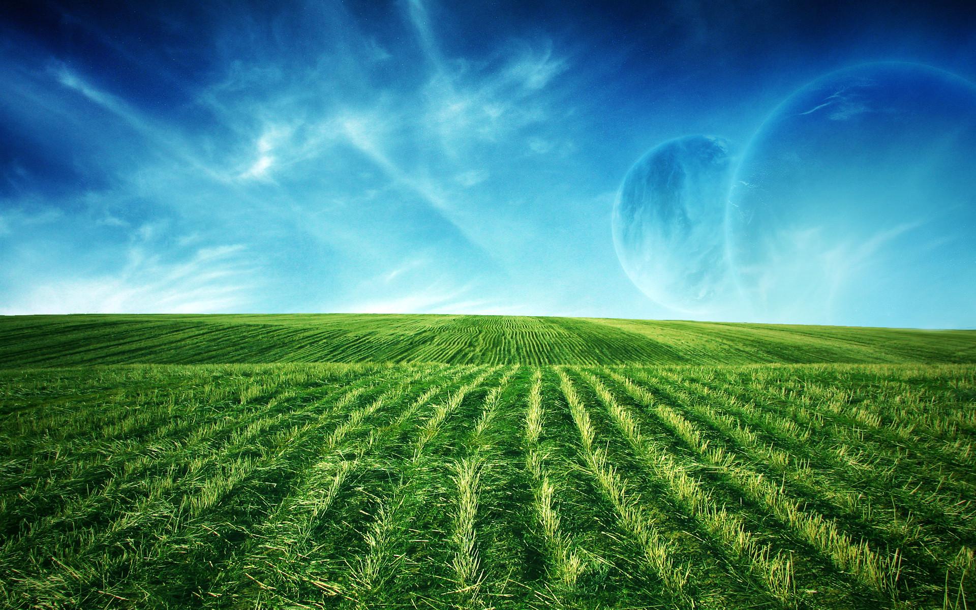 Green Field WideScreen Wallpaper