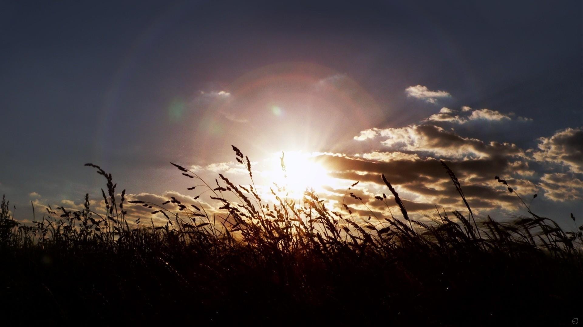 Summer Nature Landscape Sun Rays Plants Wallpaper     136222