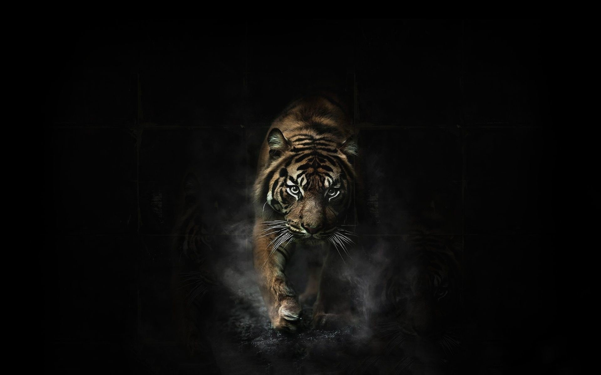 Tiger Wallpapers Collection For Free Download   HD Wallpapers   Pinterest   Tiger  wallpaper, Wallpaper and Hd wallpaper