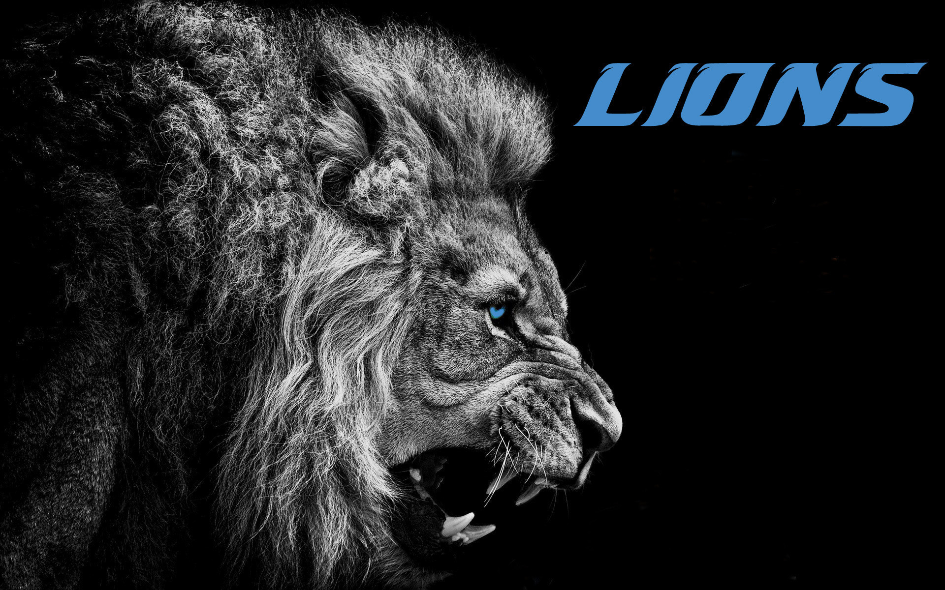 Download free detroit lions wallpapers for your mobile phone by   HD  Wallpapers   Pinterest   Detroit lions wallpaper