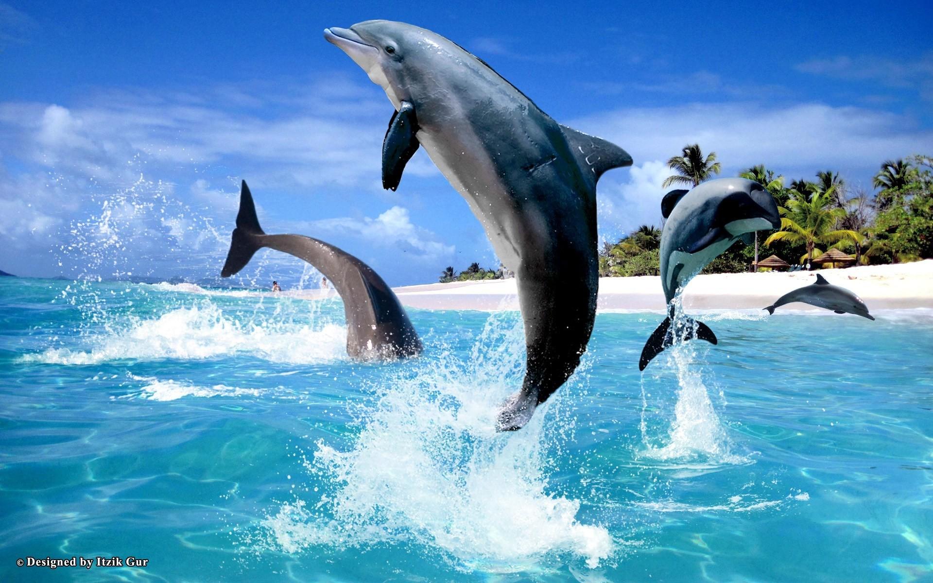 Free Miami Dolphins Wallpaper Screensavers Wallpapersafari