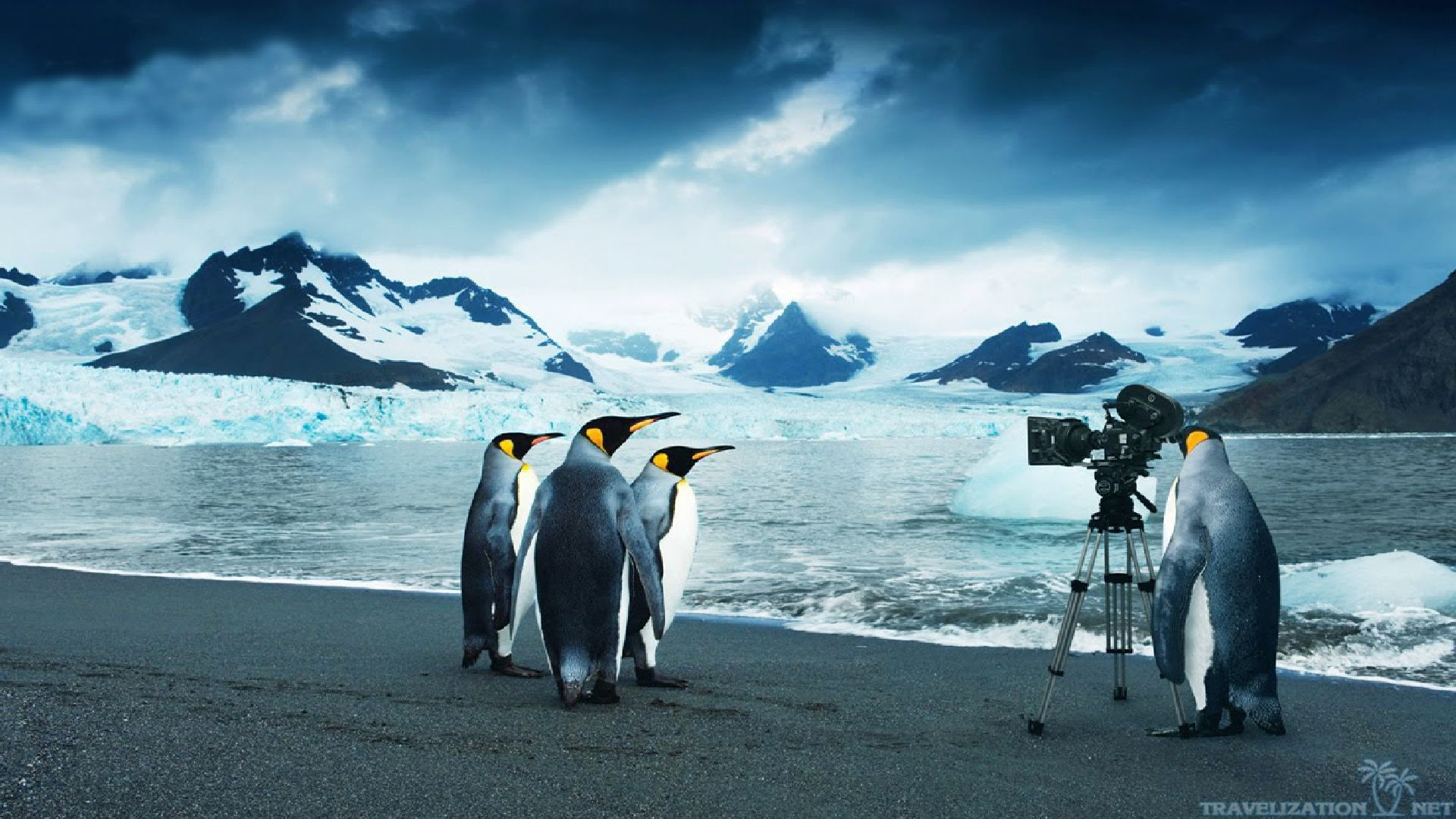 Pittsburgh Penguins HD desktop wallpaper : Widescreen : High Images Of Penguins  Wallpapers Wallpapers)