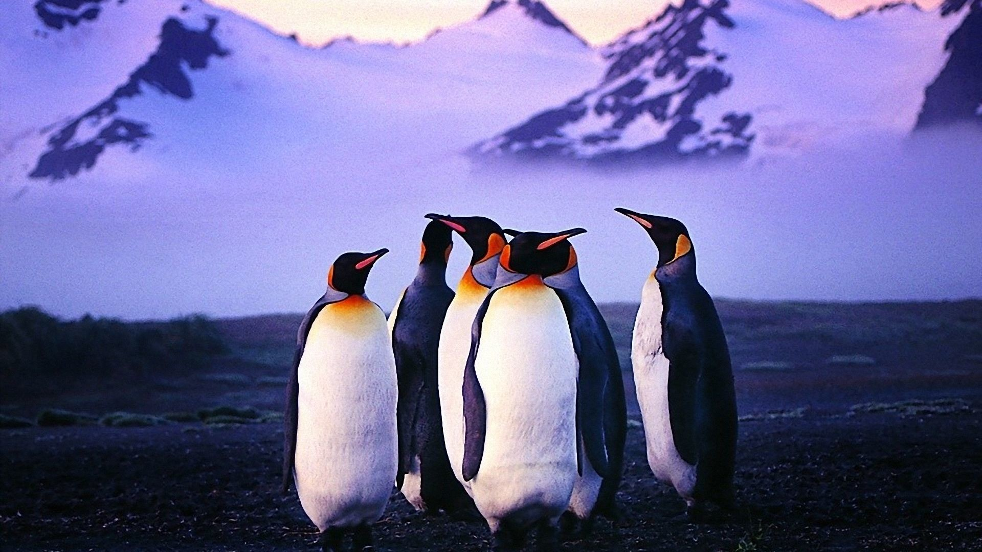 … penguins wallpapers free download free desk wallpapers …