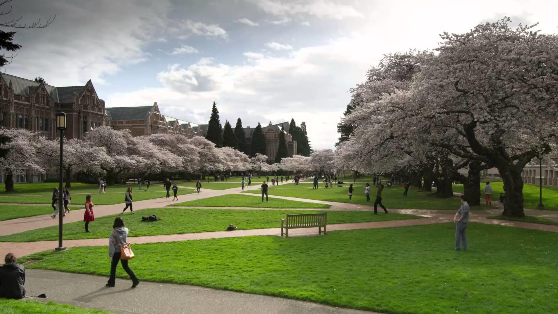 University Of Washington Wallpaper