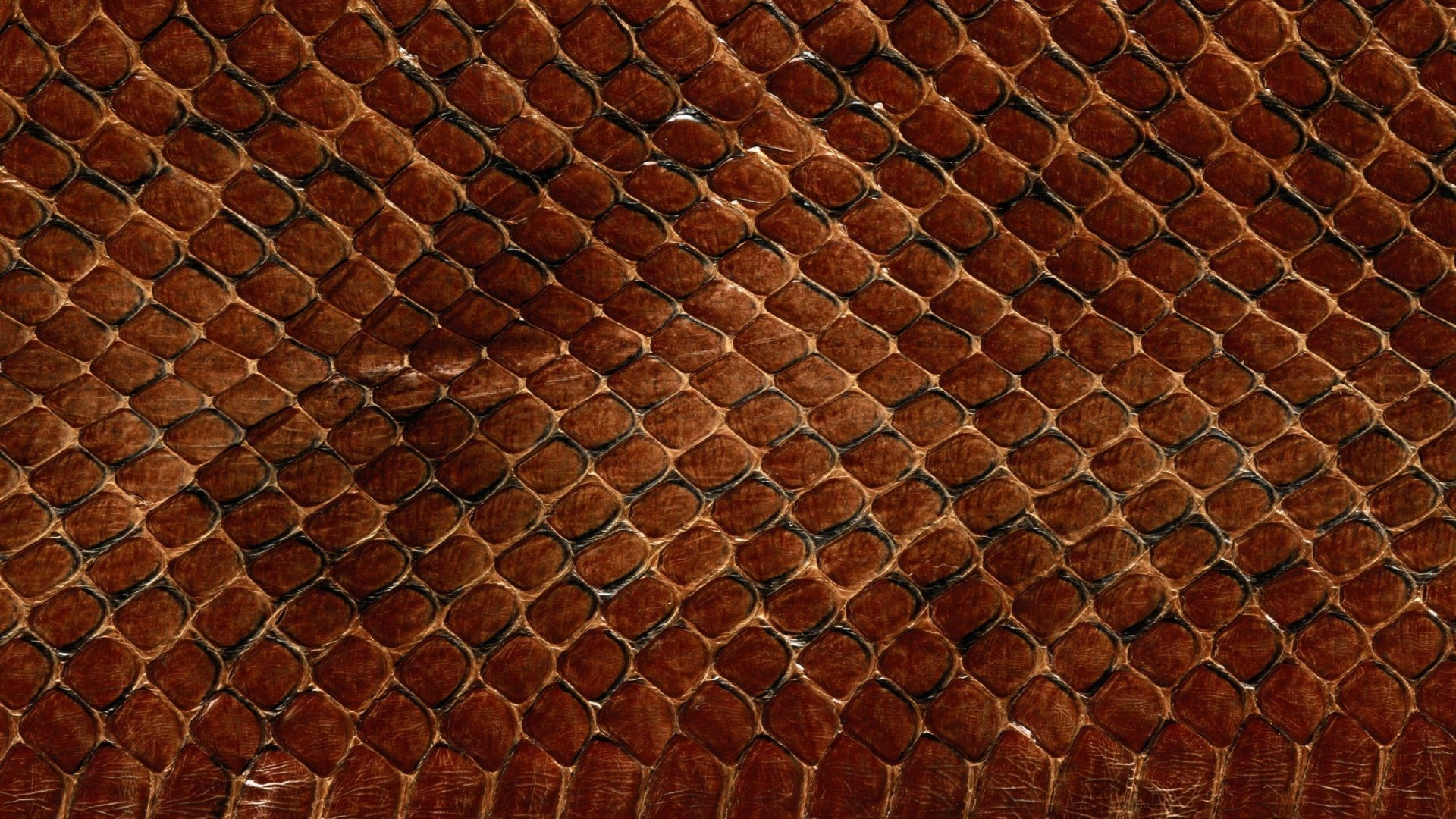 Preview wallpaper texture, leather, snake, scales, background 1920×1080