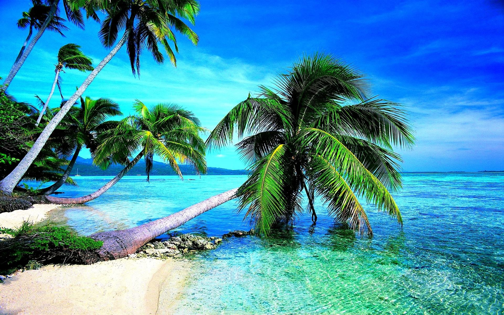 Tropical Beach Wallpaper 1080p
