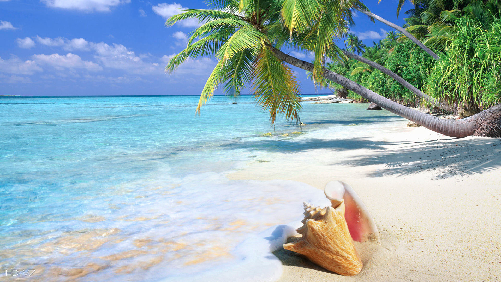 tropical beach shell | HD WALLPAPERS GALLERY #81