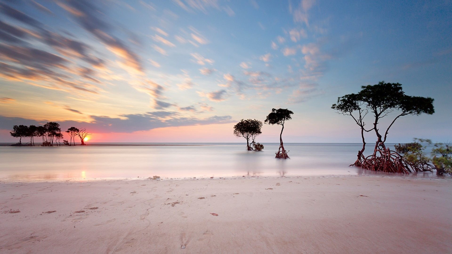 Seashore Tag – Sea Pinky Sunset Grow Shore Silhouettes Trees Seashore Beach  Live Wallpaper Free Download