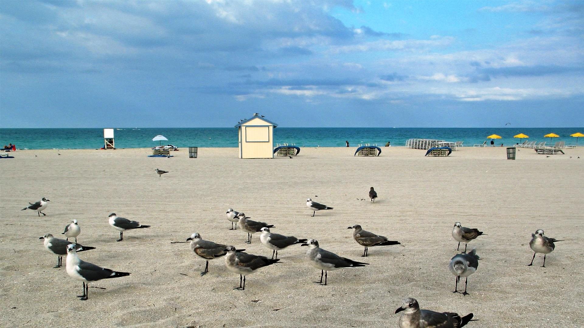 Miami   Miami Beach Florida USA HD Wallpaper Miami Beach Florida USA    powermia4u2   Pinterest   Miami, Miami beach and Sunny beach