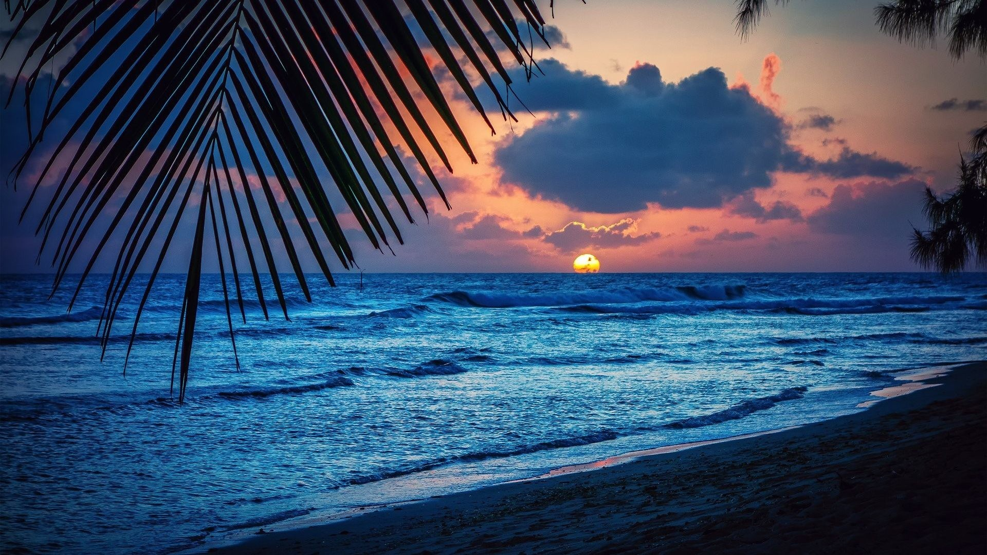 Caribbean Tag – Sun Leaves Palm Sea Barbados Silhouette Nature Landscape  Beach Sunset Evening Trees Caribbean