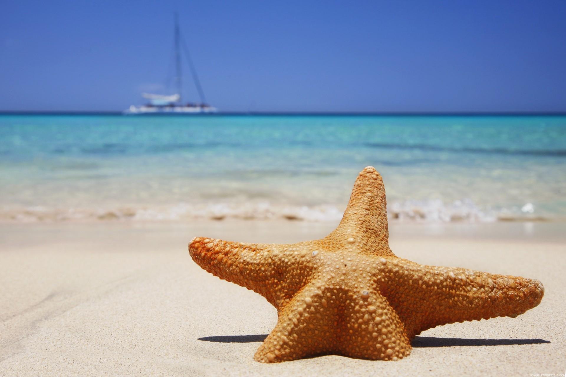 Starfish Beach Images