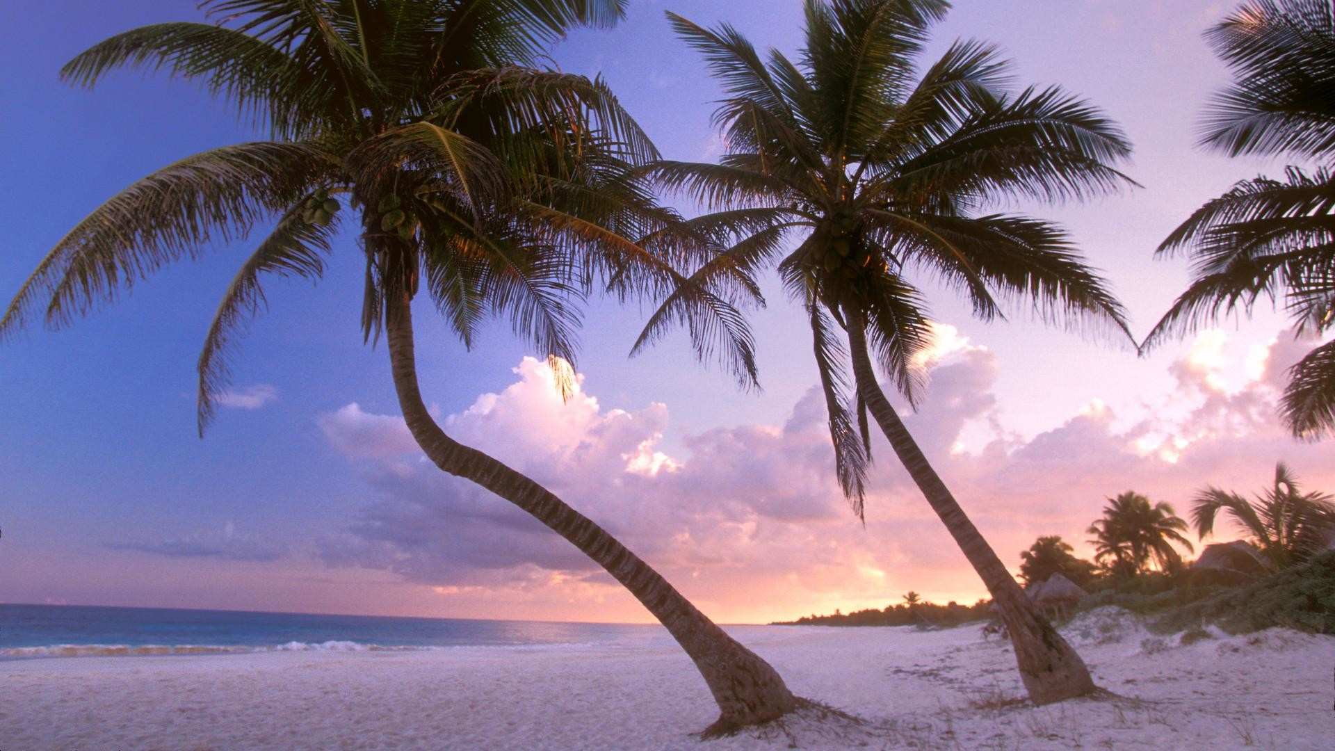 background, cool, wallpapers, mexico, sways, backgrounds,