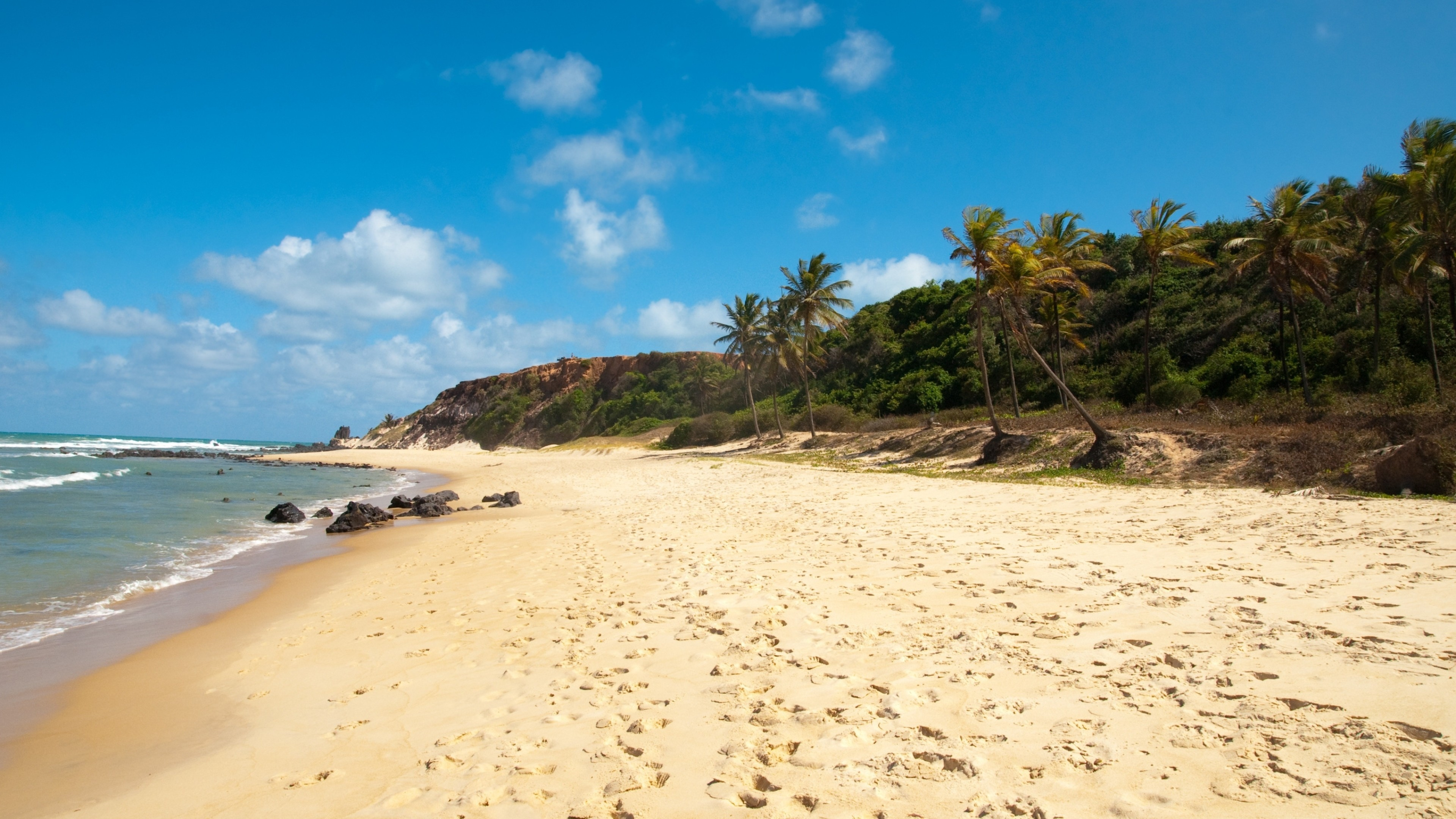 Wallpaper beach, sand, coast, traces, palm trees, resort, mexico