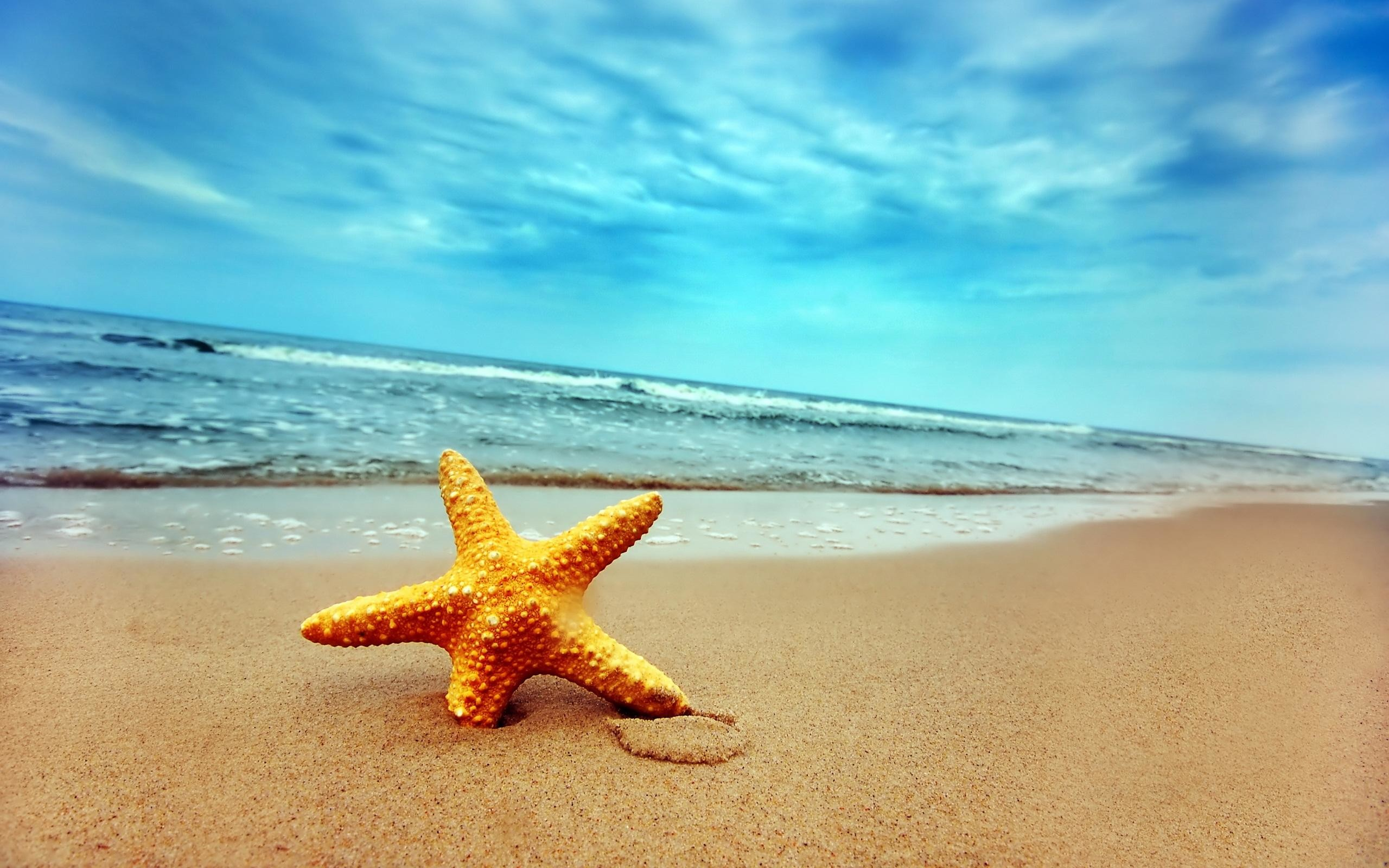 Starfish on Beach Desktop Wallpaper Background Desktop Wallpaper .