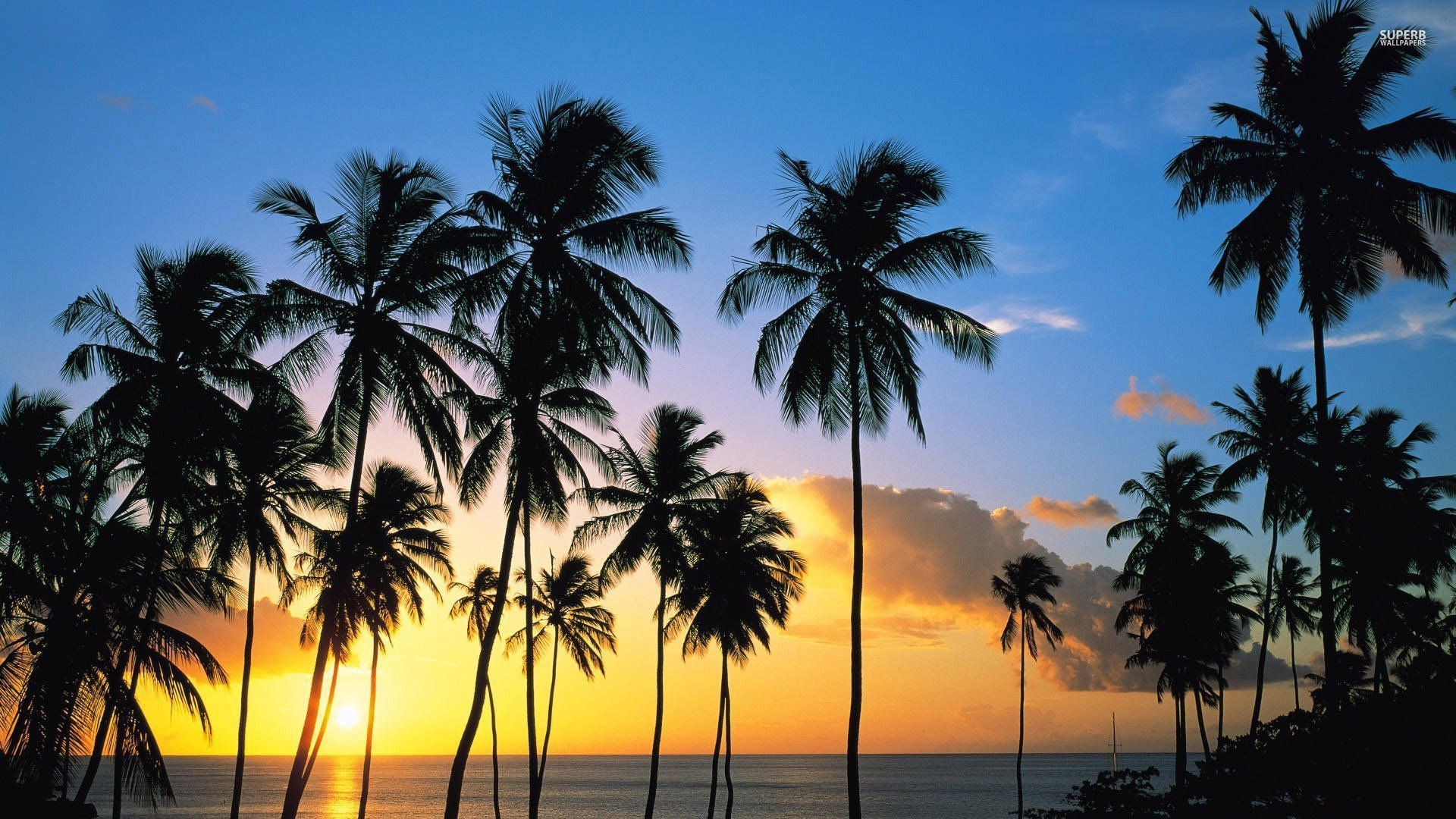 Palm tree silhouettes in the sunset wallpaper – Beach wallpapers .