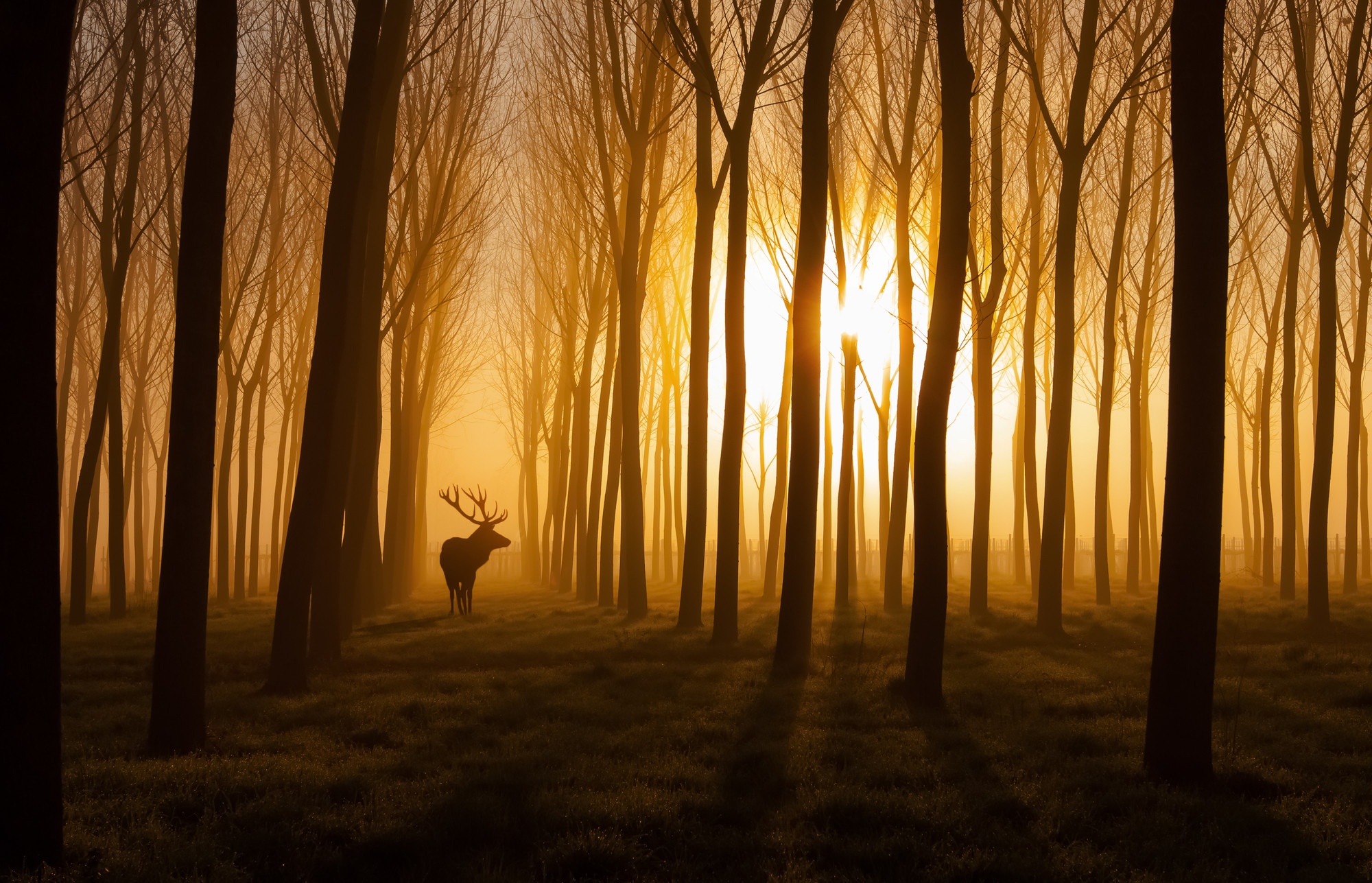 Forest Stag Mural Wallpaper
