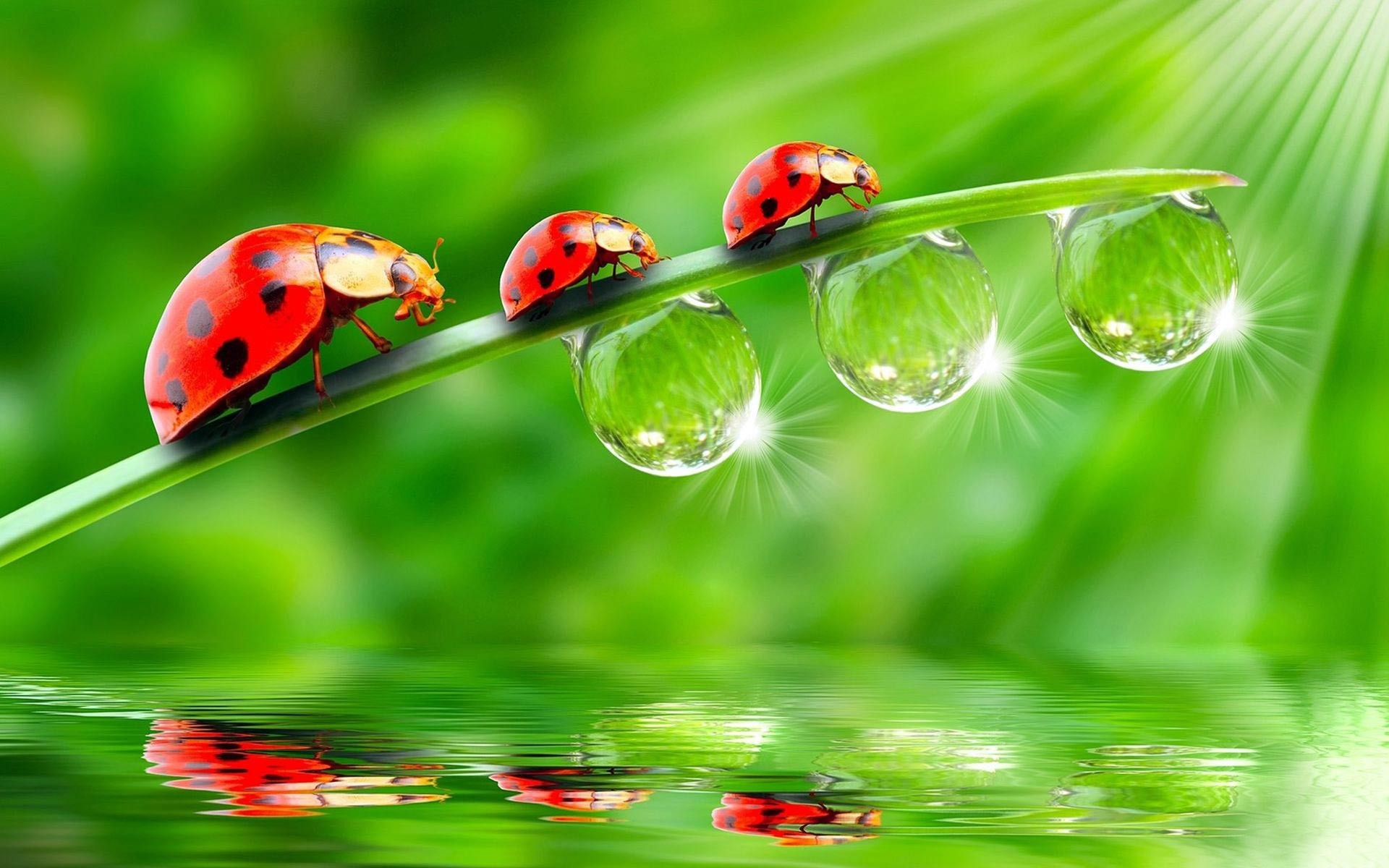Cute Ladybug Wallpaper High Quality Resolution for Background