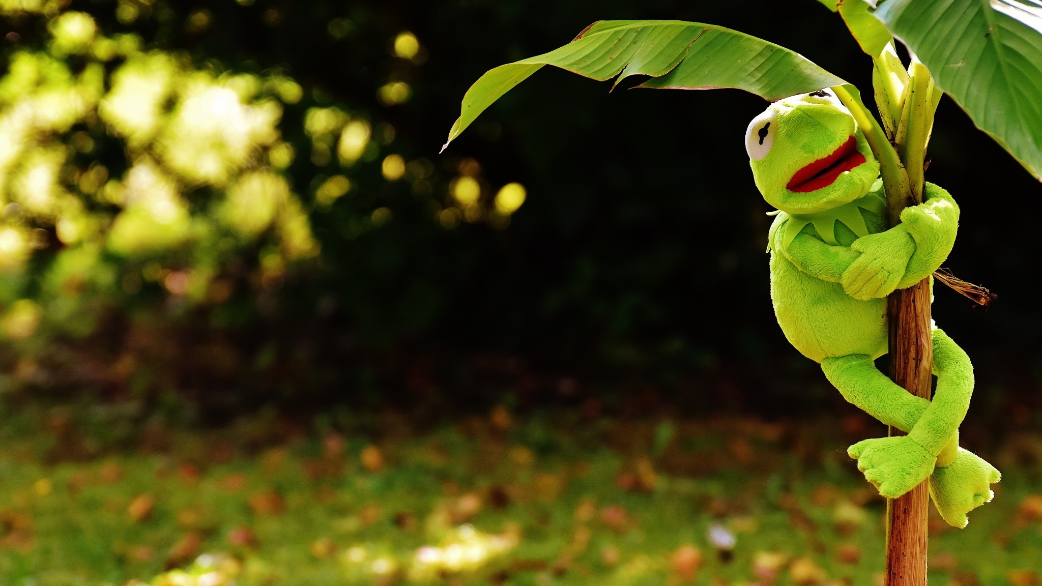 Preview wallpaper toy, kermit the frog, plant 2048×1152
