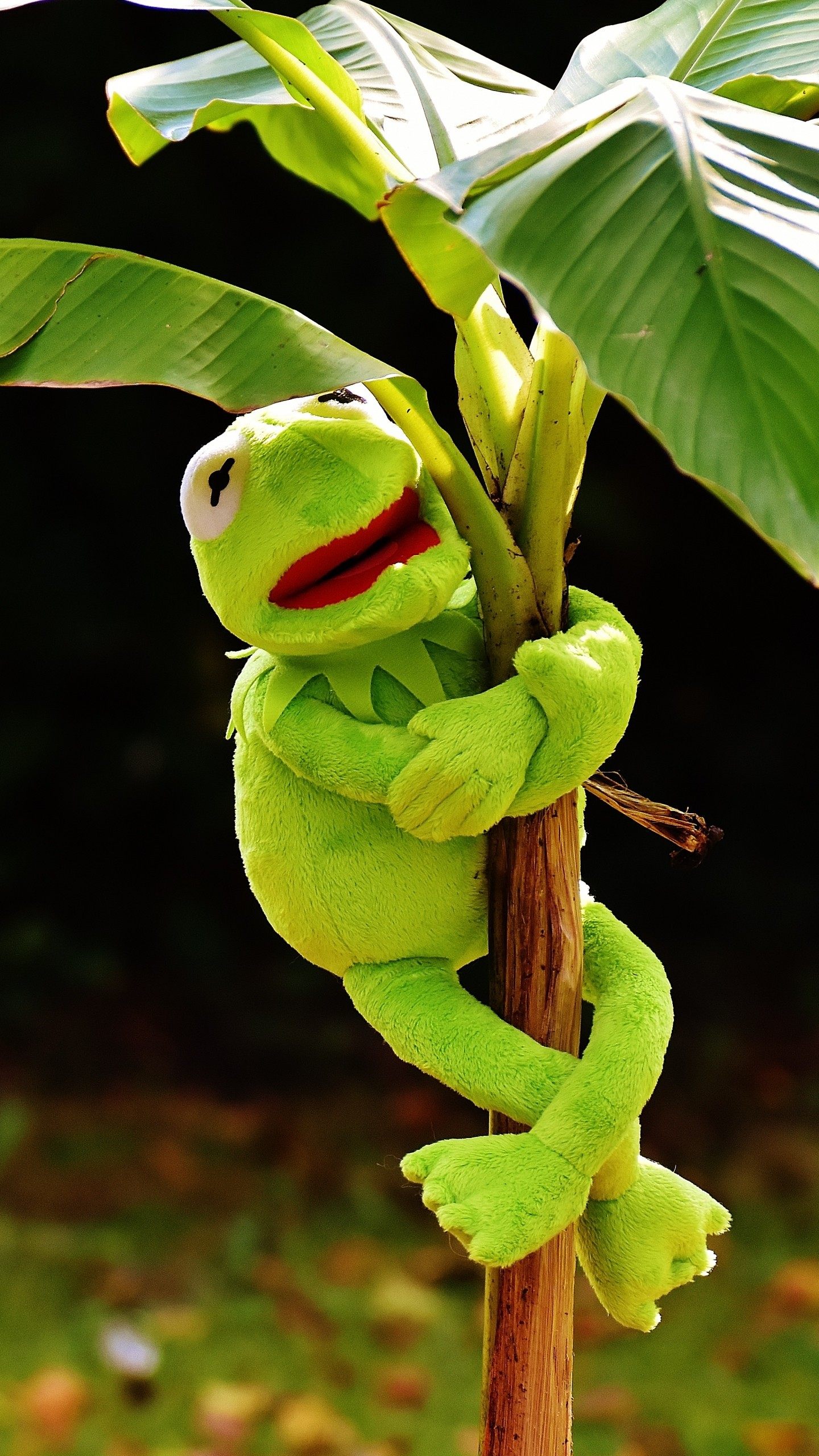 Wallpaper toy, kermit the frog, plant