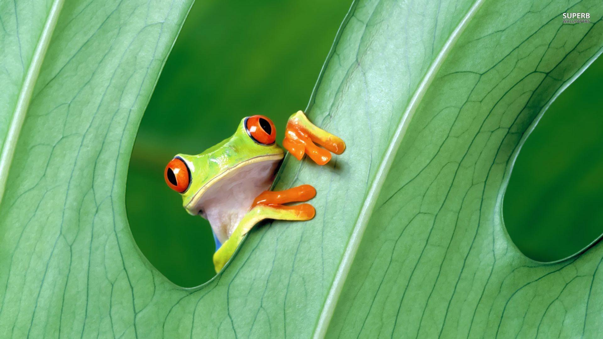 PC Frog Wallpapers, Anatoli Berger. 0.188 MB. Frog Wallpaper