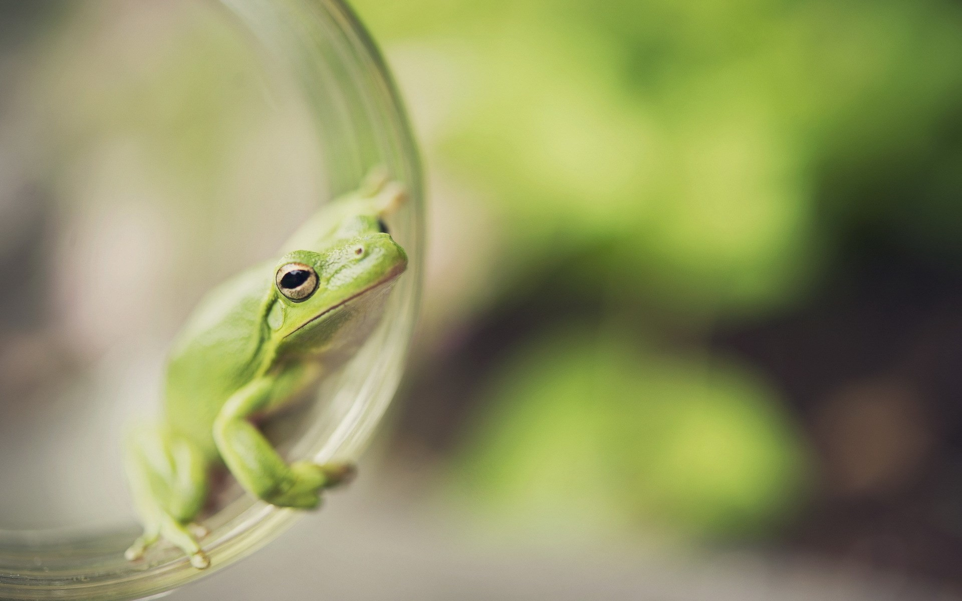 frog wallpaper hd backgrounds images (Orton Allford 1920×1200)