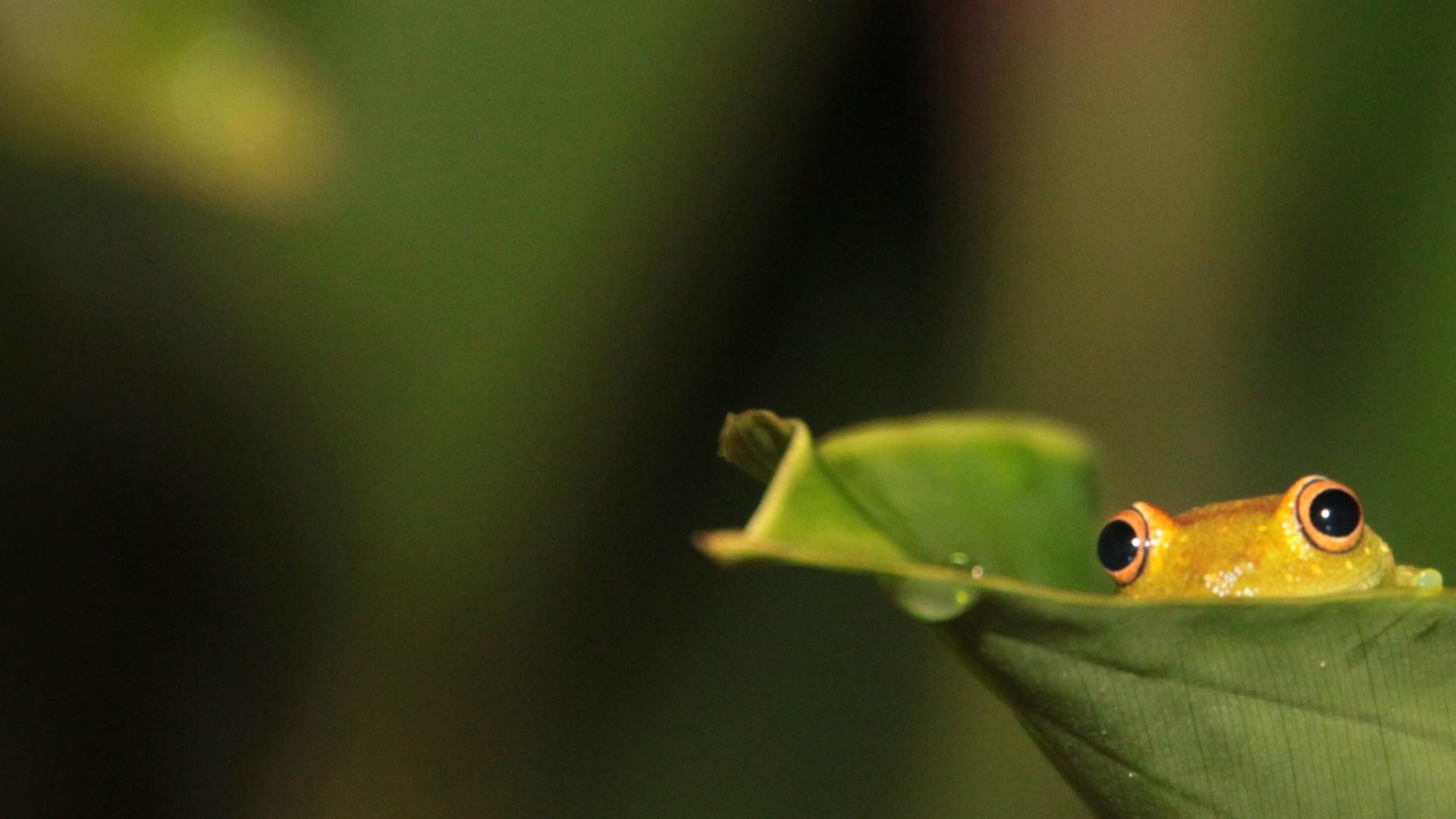 Frogs Wallpaper Cute Little Frogs Wallpaper | HD Wallpapers | Pinterest |  Wallpaper