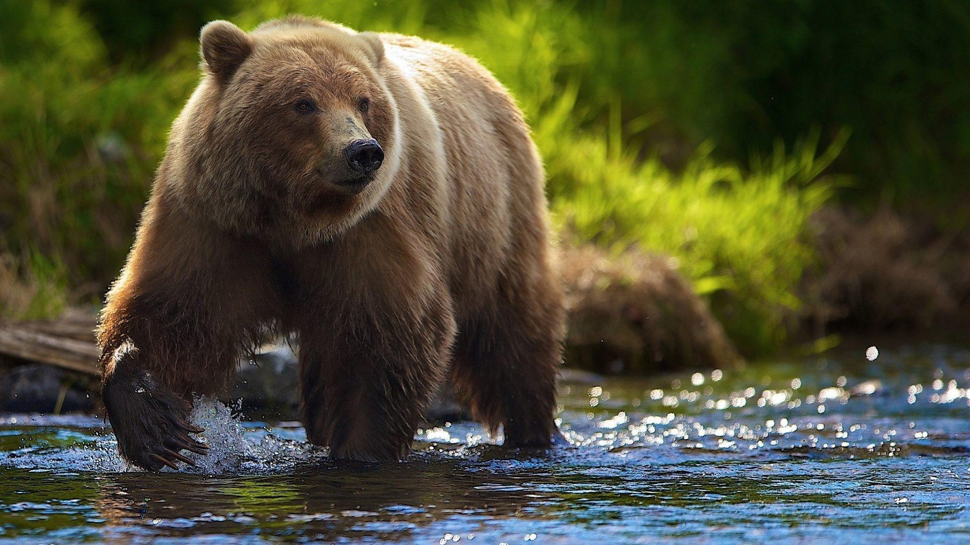 Bear Wallpaper Mobile