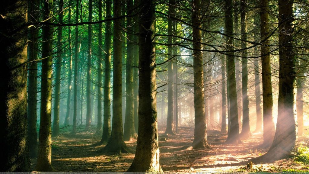 Once Upon A Time Forest Wallpaper