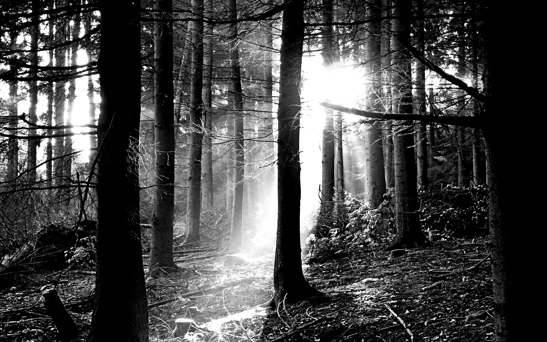 Black And White Tree Wallpapers Once Upon A Time by Adam Owen #4