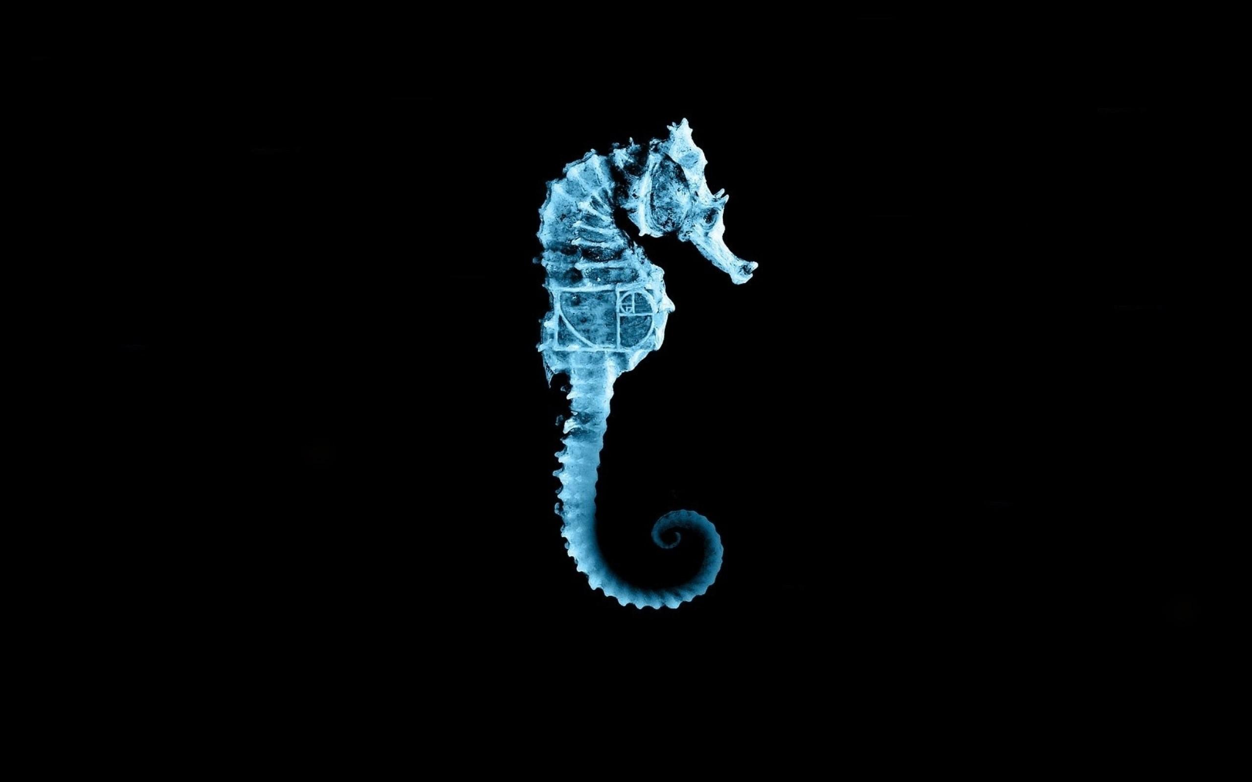 Fringe Seahorse Wallpaper [2560 × 1600] …